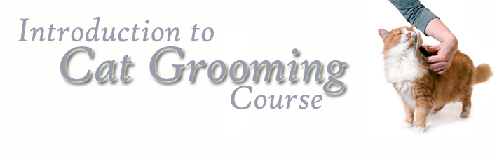 Introduction to Cat Grooming